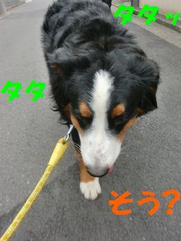 2009_0405_084218-CIMG4547.jpg