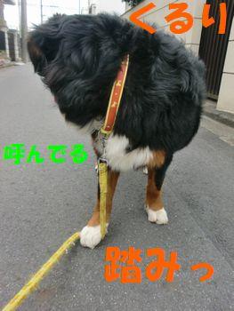 2009_0405_084237-CIMG4550.jpg