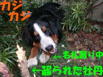 2009_0405_175421-CIMG4677.jpg