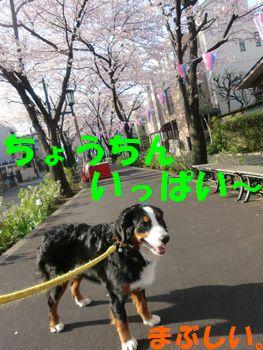 2009_0406_072706-CIMG4691.jpg