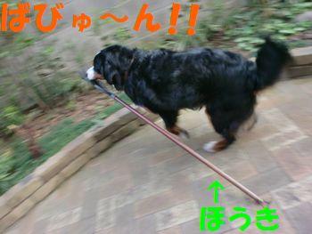 2009_0408_172509-CIMG4779.jpg