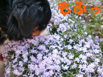 2009_0410_074519-CIMG4810.jpg