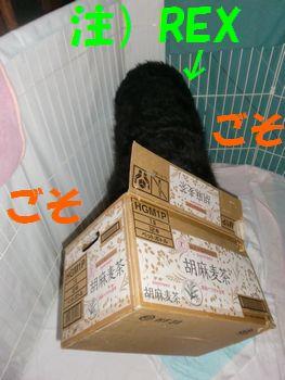2009_0413_060801-CIMG5096.jpg