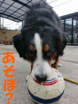 ボールで遊ぼ!