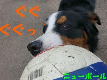 ボール取りっこで遊ぼ!