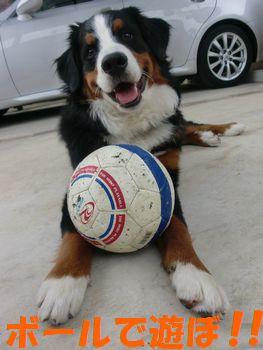 ボールで遊ぼう!!