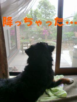 2009_0505_151025-CIMG6556.jpg