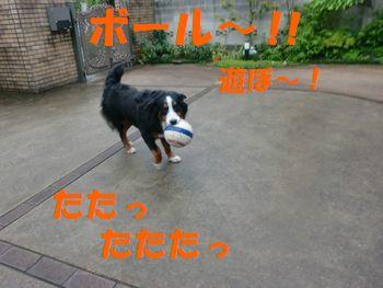 ボール~!