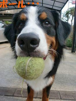 ボールで遊ぶね!
