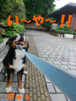 い~や~!!