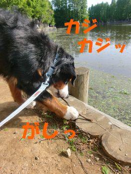 沼のほとりでカジカジ~!