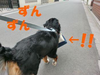 お散歩!お散歩~!