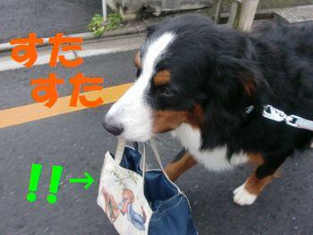 お散歩~!今日もかわらずいつもの場所~!