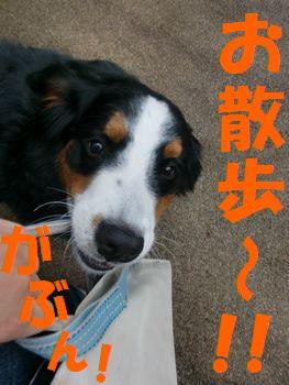 お~さ~ん~ぽ~~!