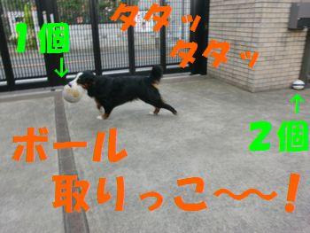 ボール好き~!