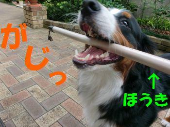 何コレ?何コレ~!!