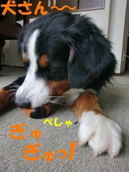 犬さんも好き~!!