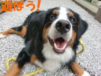 お散歩より遊ぼうよ~!