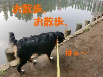 行けばいいんでしょ。お散歩。
