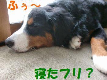 寝たフリ。寝たフリ・・・