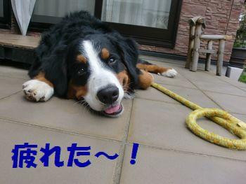 お散歩終わり~!