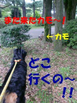 ごあいさつ~する~!