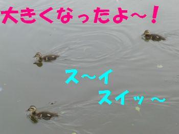 ちっちゃいのがおっきく~!