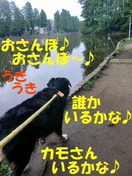お散歩楽しい~♪