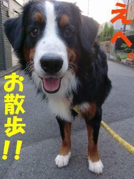 お~さん~ぽ~!