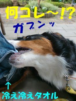 ツメタ~!?