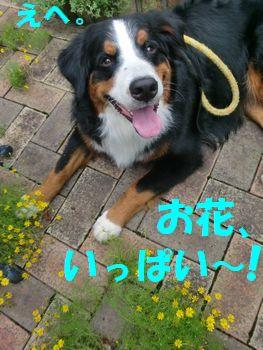 2009_0804_073927-CIMG2315.jpg