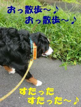 お散歩だね~♪