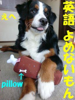 日本語も読めないけど・・・。