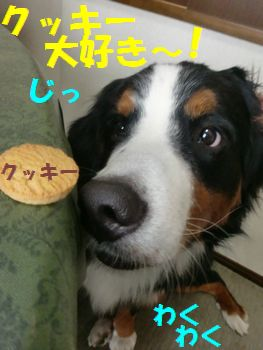 クッキー?クッキー?