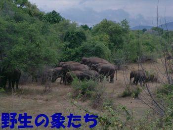 野生の象たち。