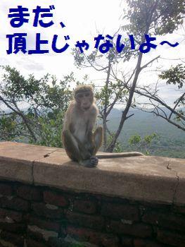 途中のお猿さん