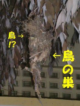 鳥の巣!?