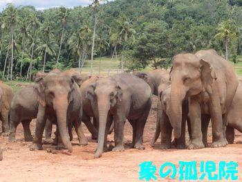 象の孤児院。