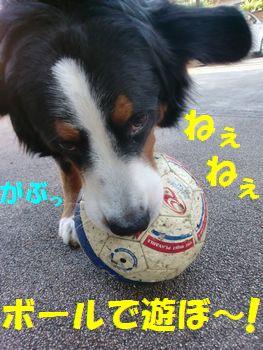 ボール!ボール!!