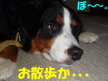 朝なのに・・・夜っぽい~?