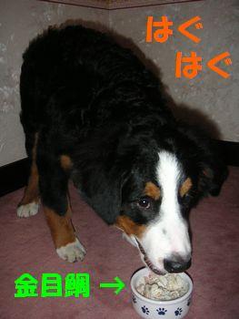 2009_10104_183255-PICT0053.jpg