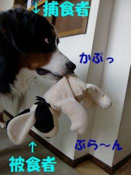 おかぁさ~ん♪取ってよ~!!