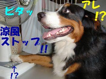 風!こないよ~!?