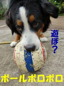 ニューボロボロボールで遊ぼ!