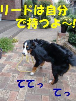 リード持ちま~~す!