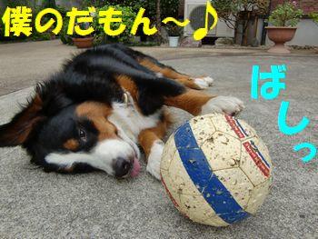大好きなんだもん、ボール!
