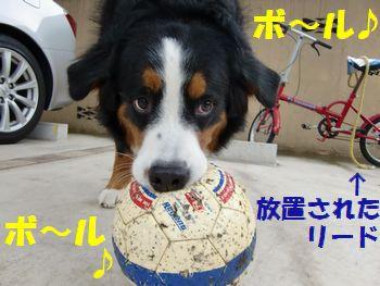 お散歩よりボールで遊ぼうよ~!