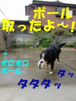 ボール取ったど~!!