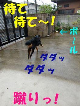待ちたまえボール~!!