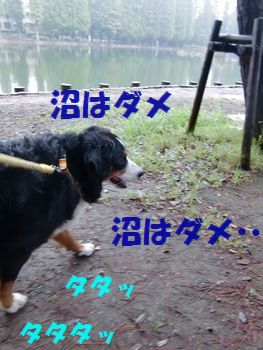 沼くらいいいじゃん~!
